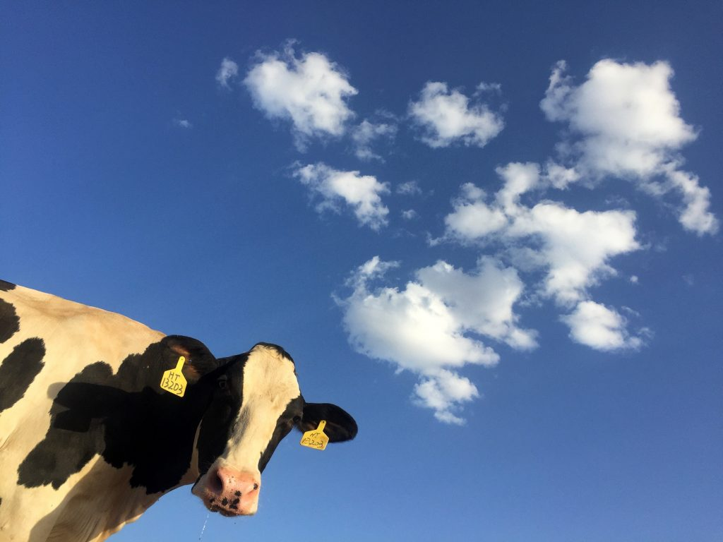Raw Milk - 6 Good Things That You Can Do For Your Health For Under $5.00